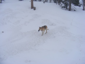 Draco exploring on Monarch Pass