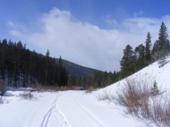 Ski and shepherd tracks on Gunnison National Forest Road 767