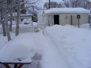 The backyard of my home in Gunnison, Colorado, on a snowy day in a snowy year