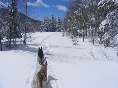 Leah leading the way back to the trailhead on Gold Creek