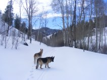 Leah and Draco heading down Willow Creek