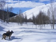 Sunny day with dogs on Willow Creek