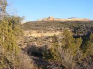 Some of Rabbit Valley is pinyon-juniper country