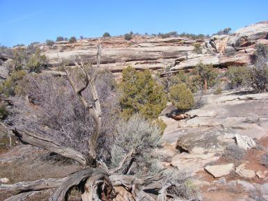 Above McDonald Creek near the Jouflas Trail