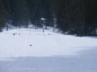 Coyote on ski trail to Tower Falls