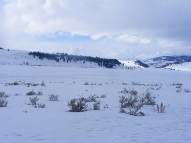 From the Buffalo Ranch, looking towards the western end of Lamar Valley