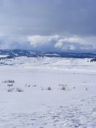 Lamar Valley in late Winter