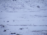 The heavy black dots are wolves of the Junction Butte Pack, on Slough Creek in Yellowstone National Park