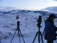 Scopes at Tower Junction, looking toward the kill that the Junction Butte Pack had made